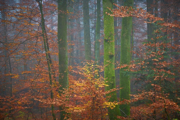 Forêt de Peseux