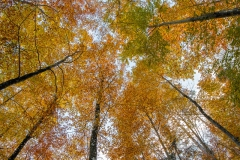 Forêts du Val de Ruz