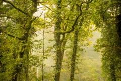 Bois de Serroue