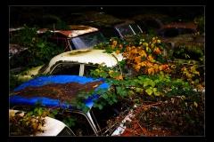Kaufdorf - Car Cemetery